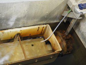 Voici un des bacs de nettoyage : le petit tuyau blanc sert à ajouter le chlore.